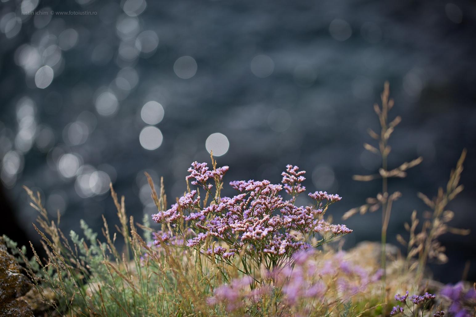 Flori sălbatice la malul Mării Negre