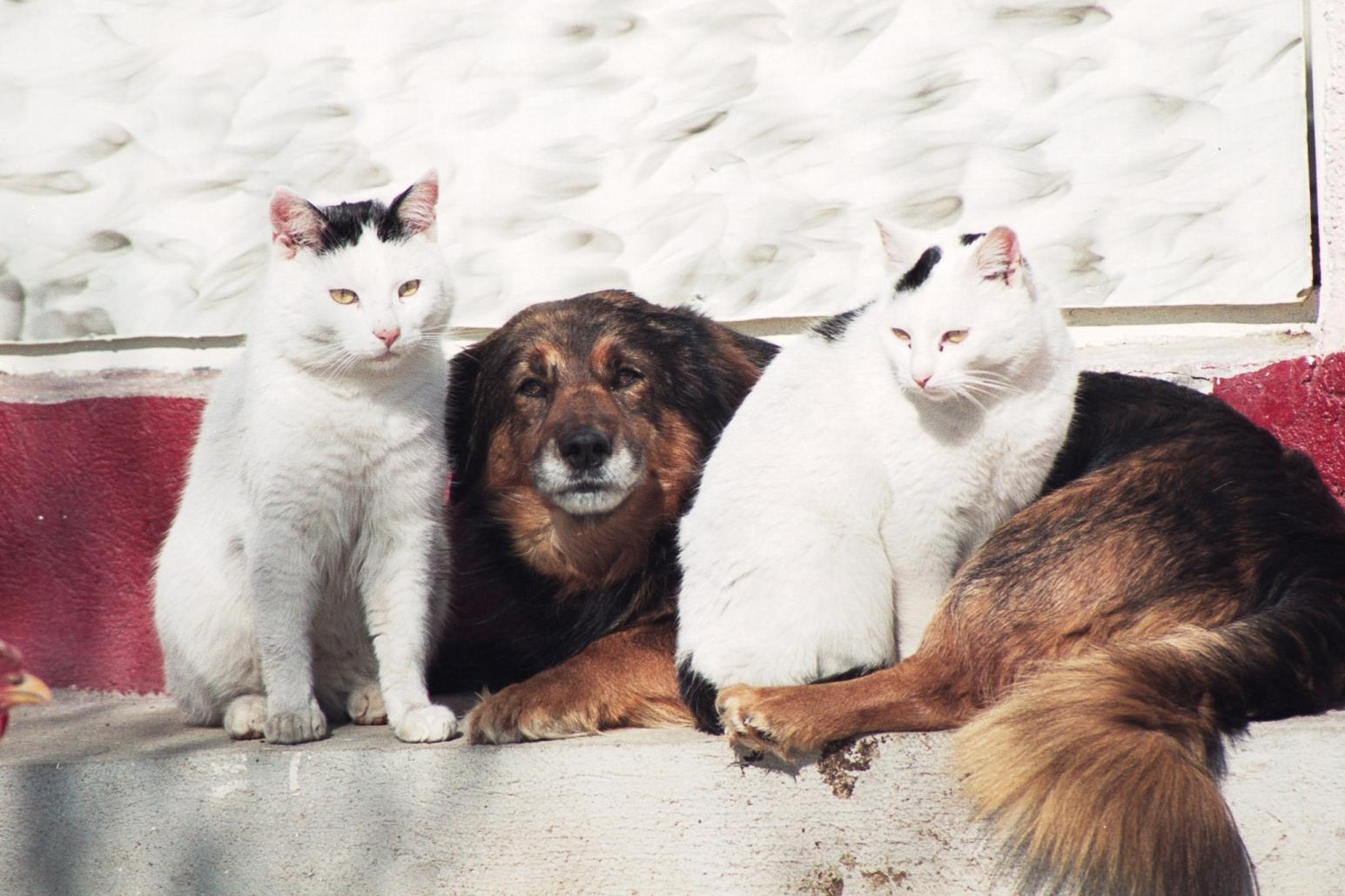 Prietenii, cainele si pisicile