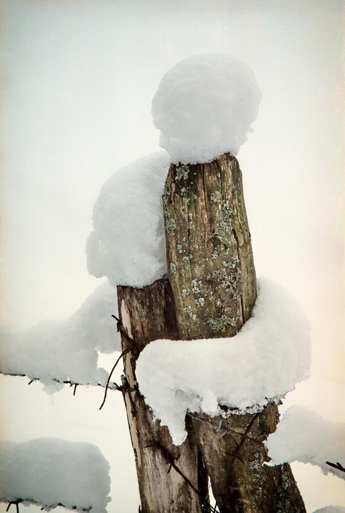 Portrete naturale de iarna