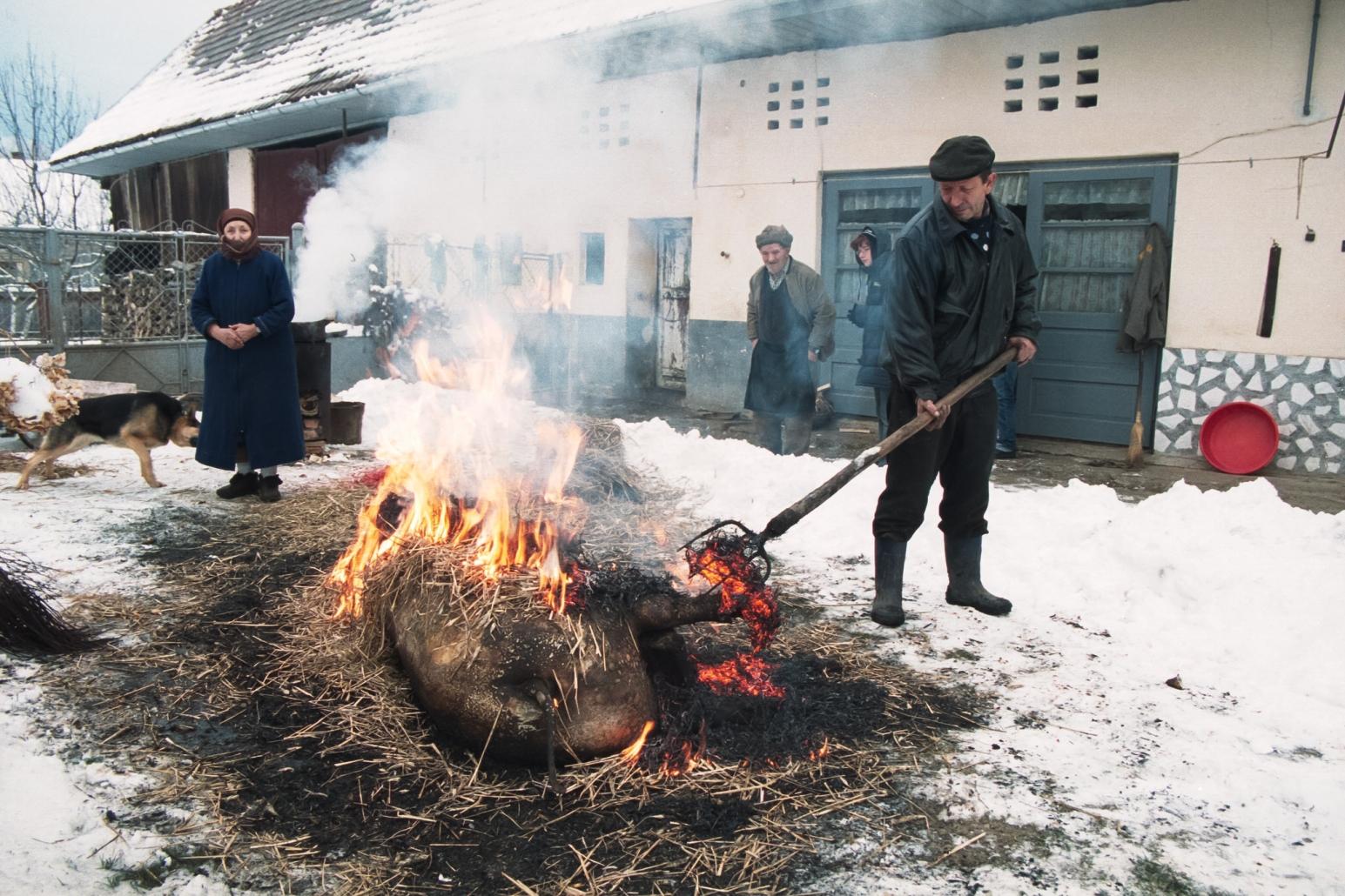 Porc de Craciun, traditional