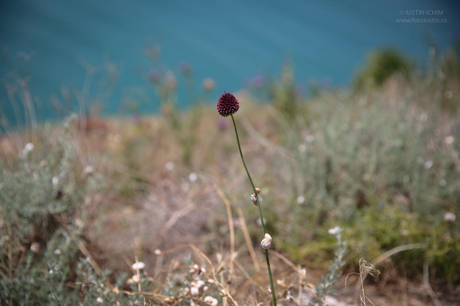 Flori salbatice, flora spontana